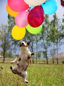 Happy_Bull